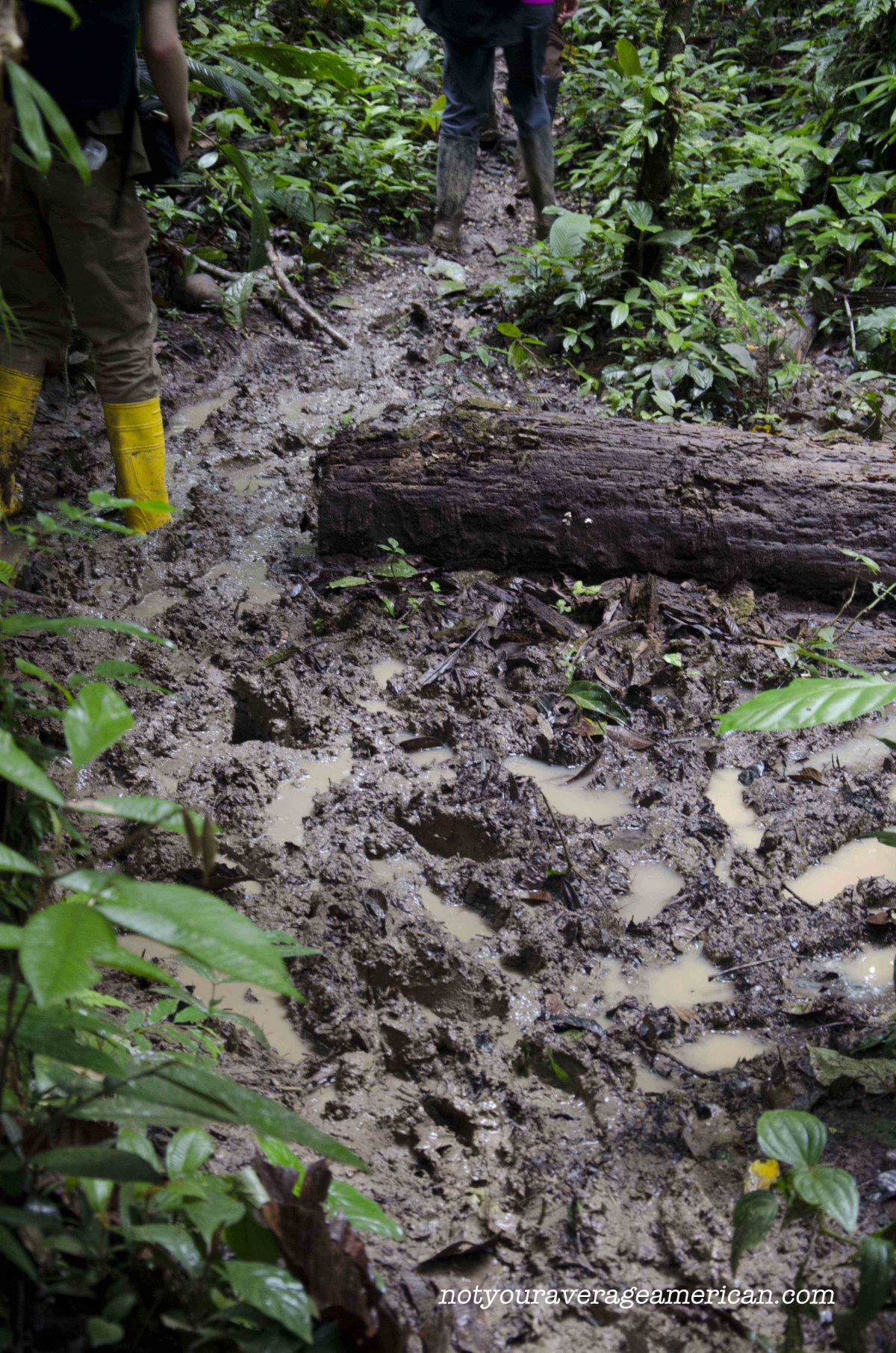 Many of the trails were so muddy that it was best to hike in rain boots, Huaorani Lodge