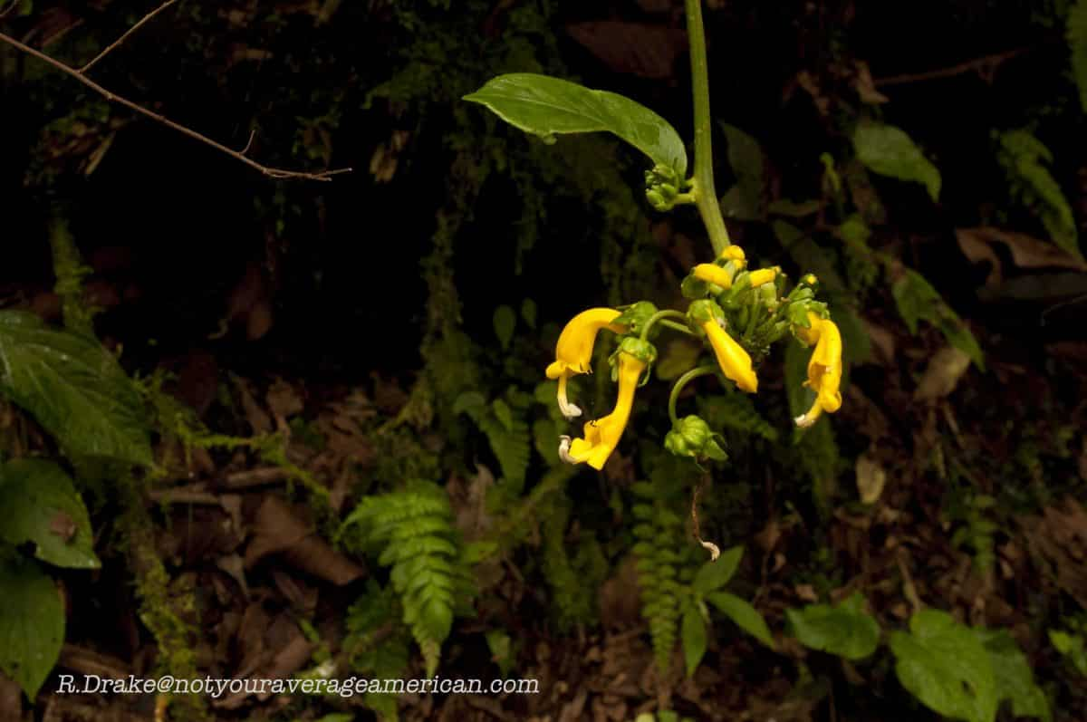 Bright flowers along the trail, The Pailón del Diablo, Baños, Ecuador
