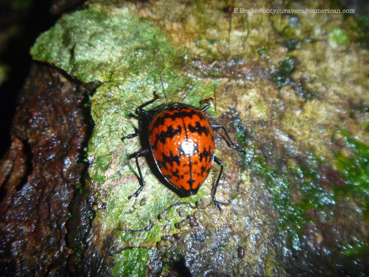 A Jungle Lady Bug