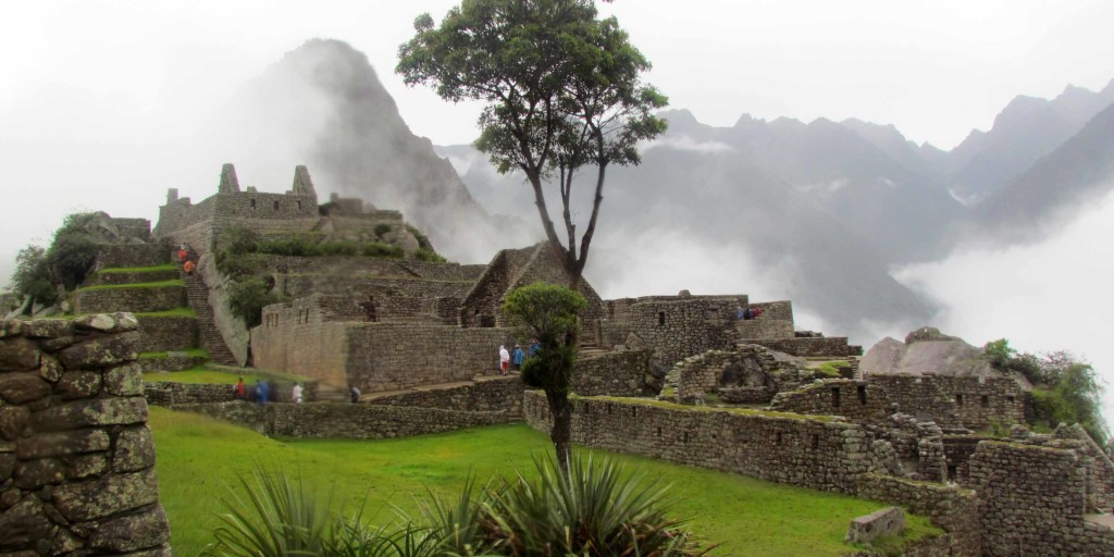 A lone tree and Wayna Picchu