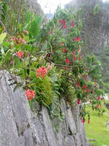 The Garden in Machu Picchu