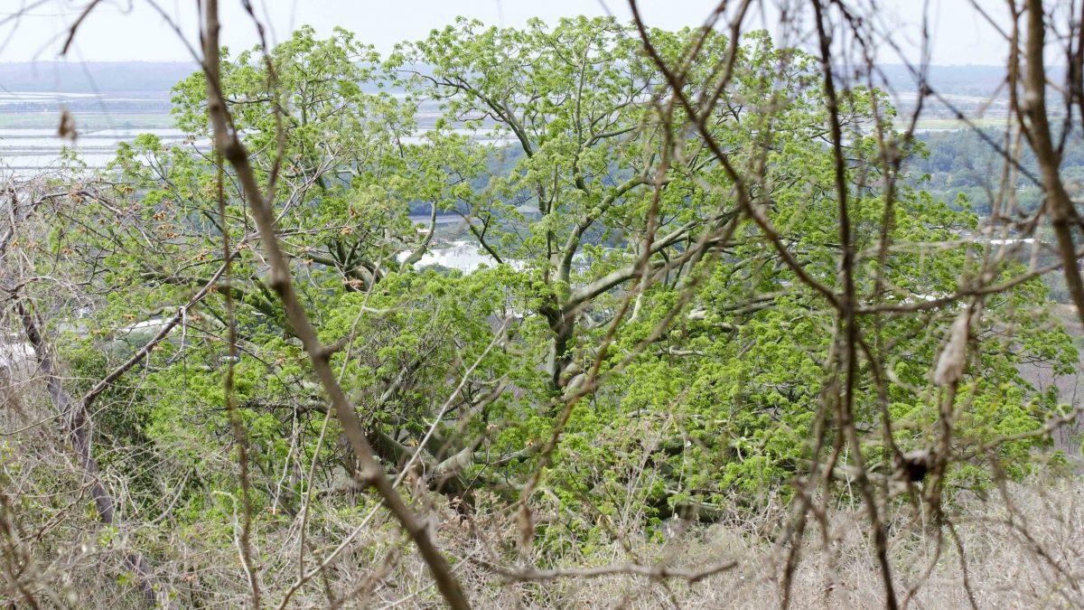 Water, Bosque Cerro Blanco, Guayaquil, Ecuador