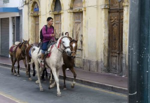 Horses with Rider, Cuenca