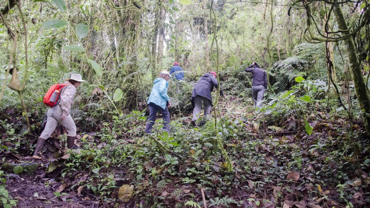 Hiking with a birding guide at Cabañas San Isidro, Ecuador | ©Angela Drake