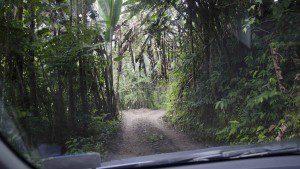 The road to San Jorge de Tandayapa