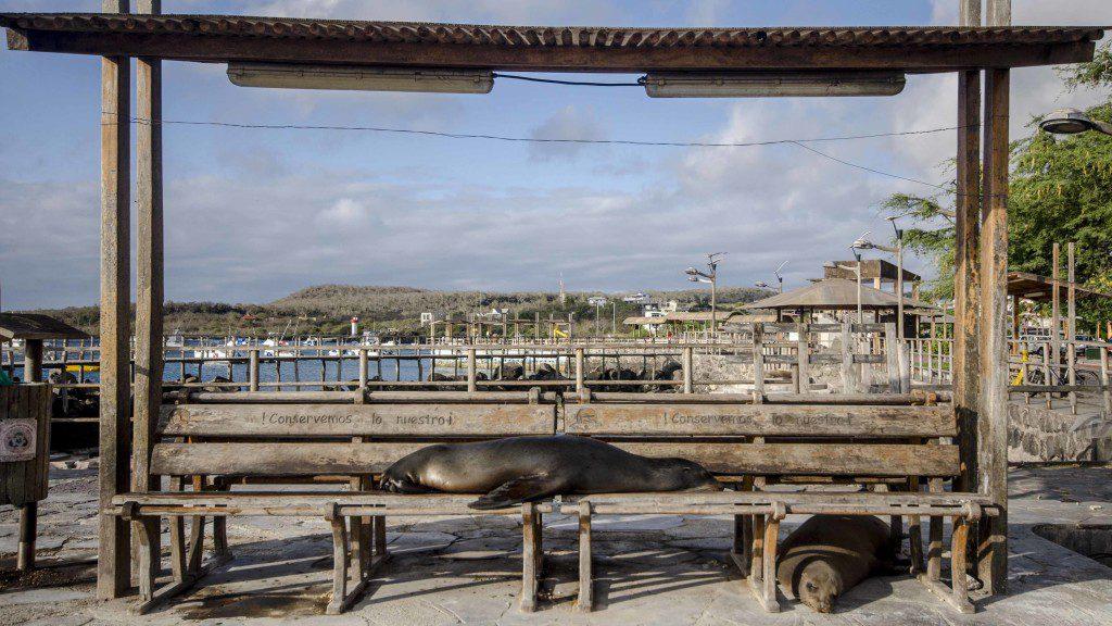Easy Living in Puerto Baquerizo Moreno