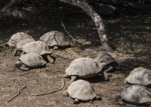 So many tortoises...