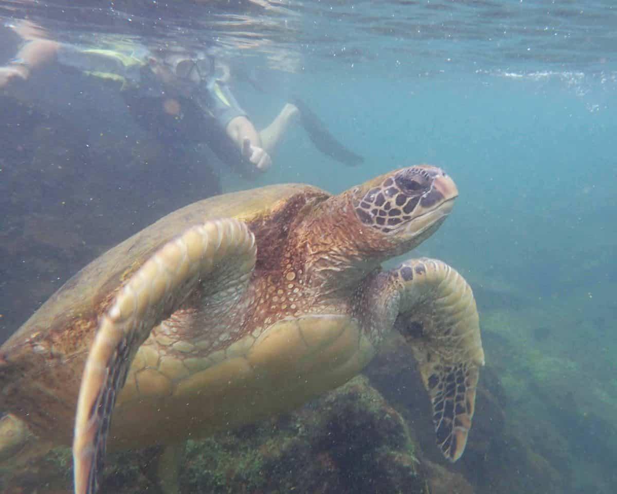 Sea Turtle, Los Tuneles, Isla Isabela