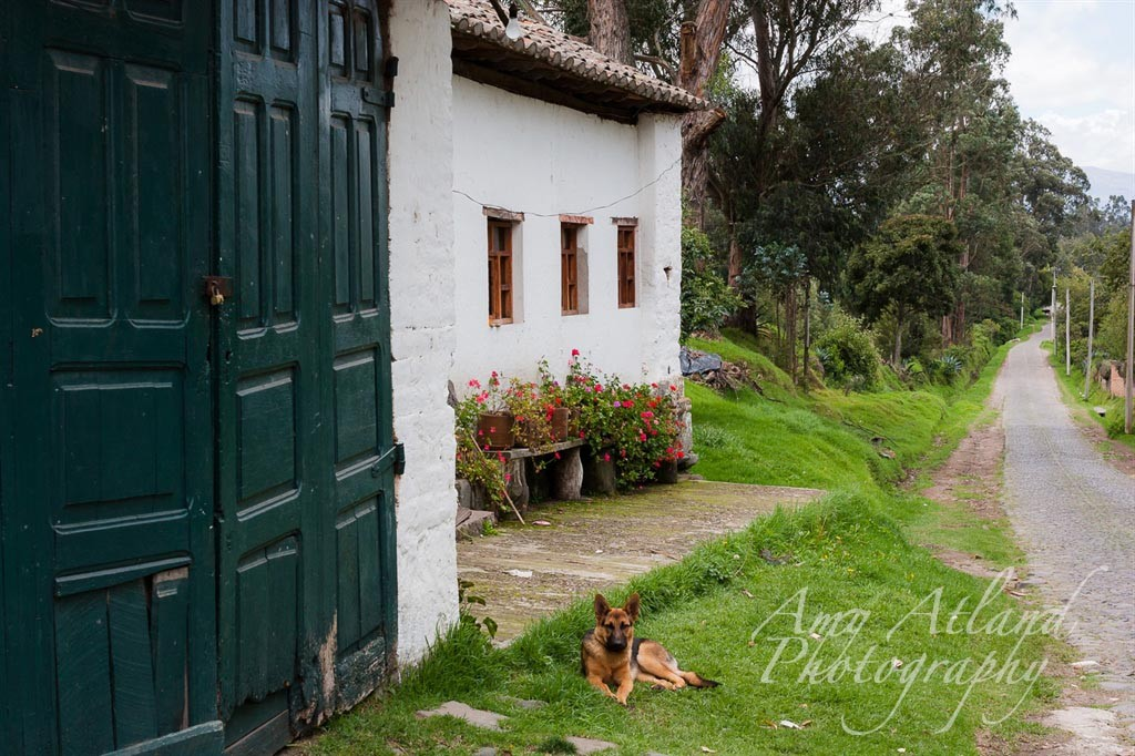 Outside of the Rose Hacienda, Cayambe, Ecuador