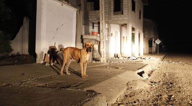 Ecuador's Dogs – Rescued and Rescuers
