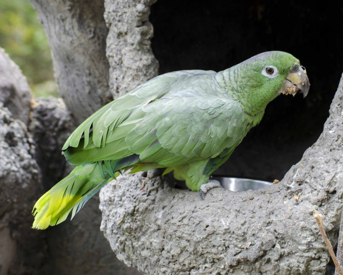 Parrot, Parque Histórico, Guayaquil, Ecuador