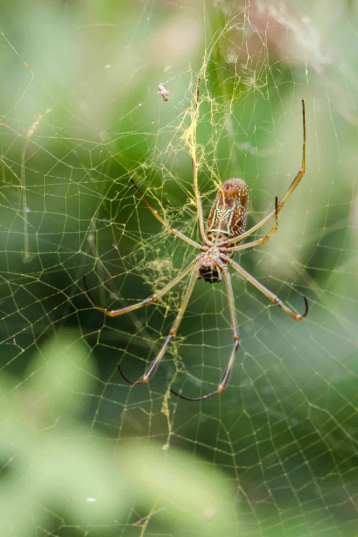 A Spider, Loja Province, Ecuador