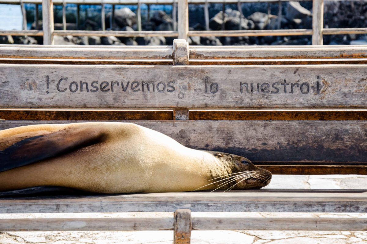 Great Photos of San Cristobal, The Galapagos