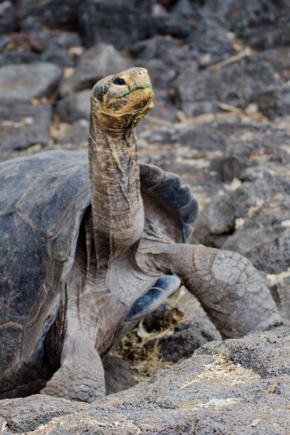 Tortoises at the Charles Darwin Center, Santa Cruz Island, Galapagos | © Angela Drake