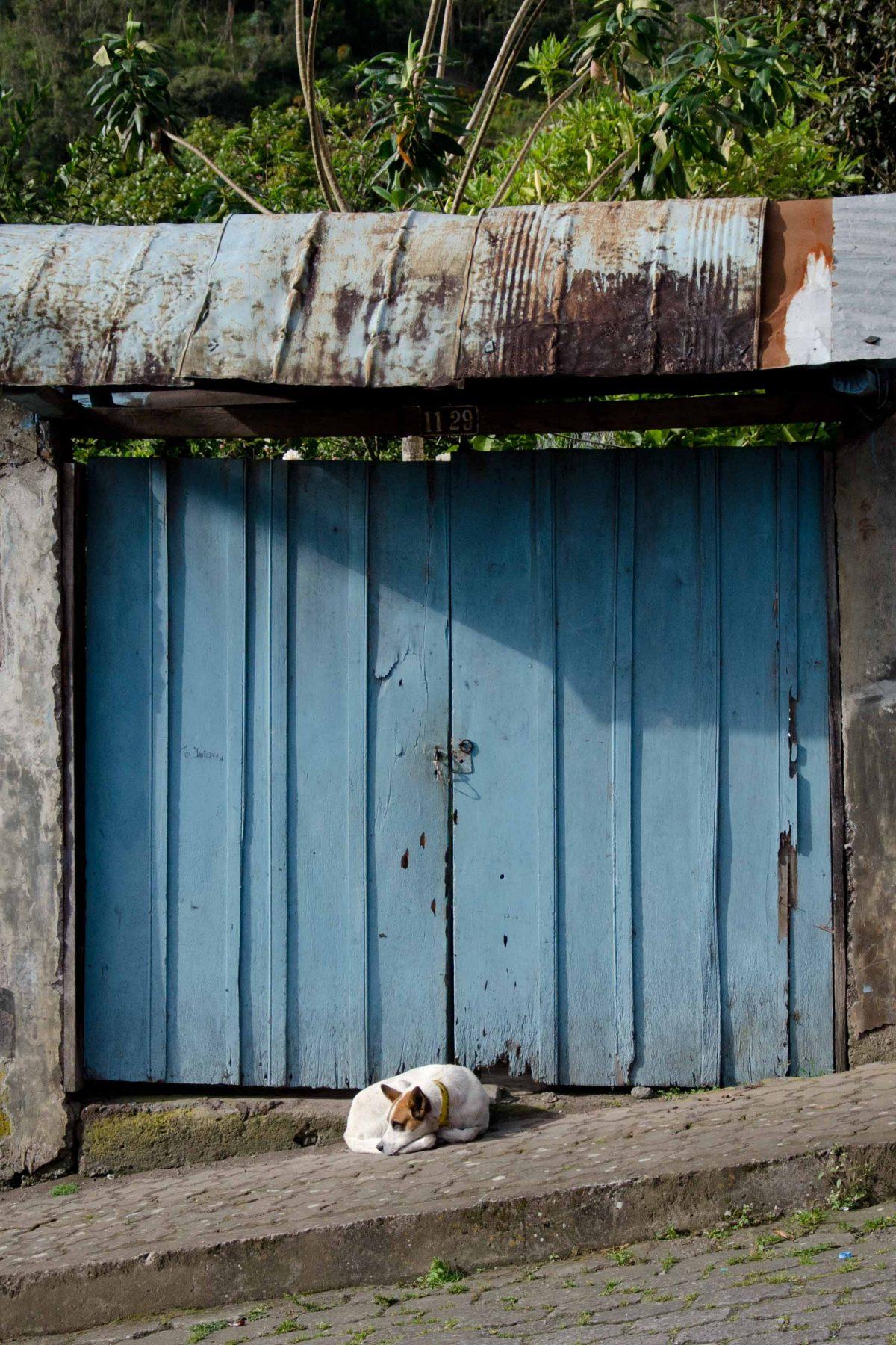 A dog, Tungurahua Province, Ecuador Por Mis Ojos