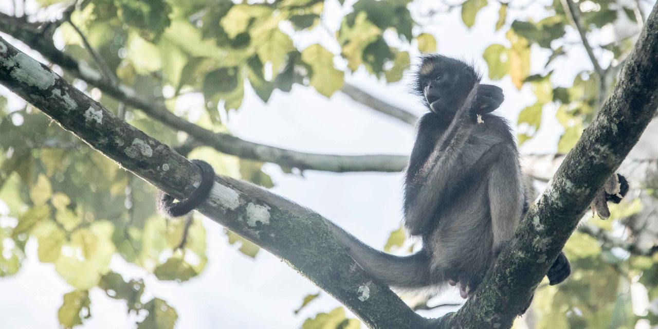 Laguna Paikawe: Wildlife Near Tena