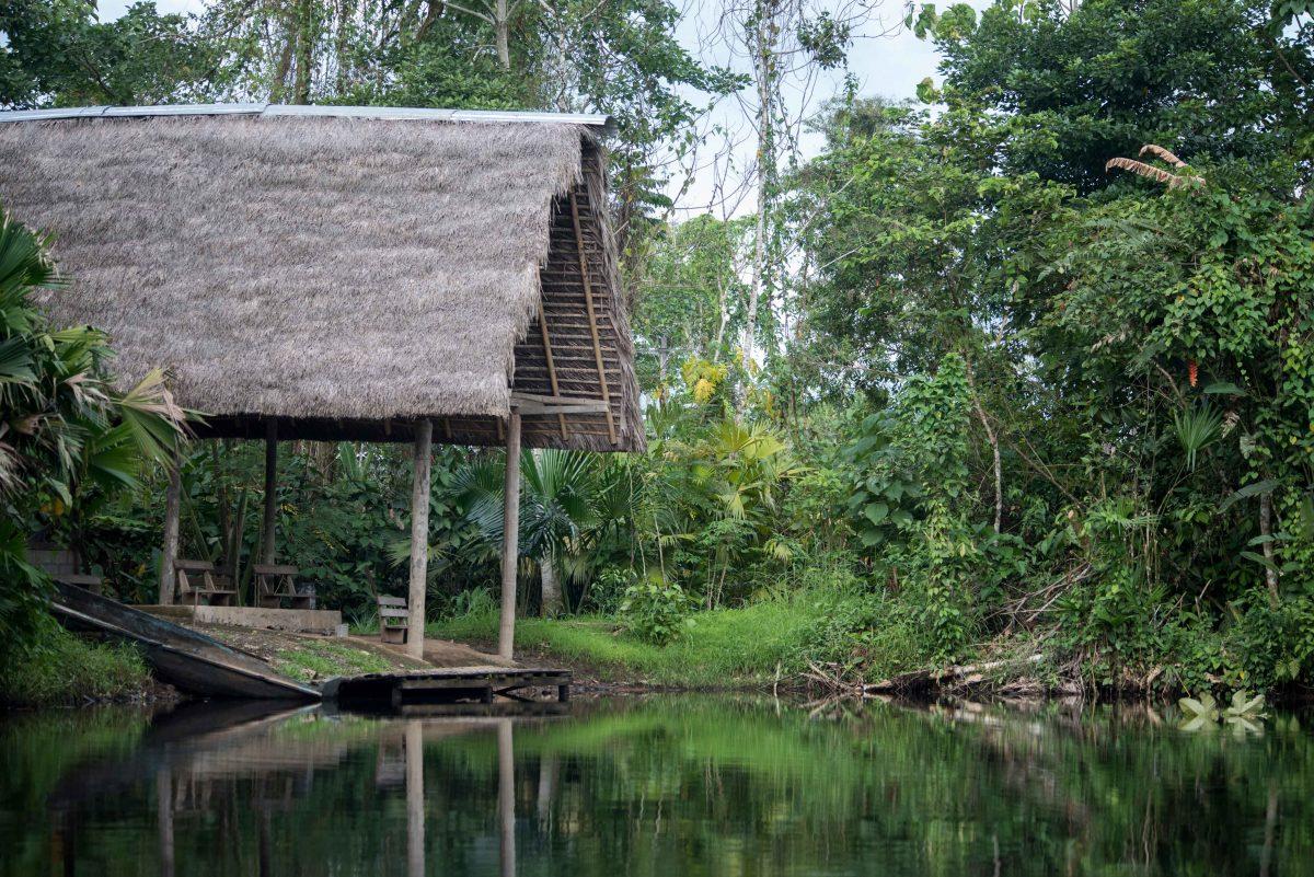 Dock, Laguna Paikawe, Misahuallí Wildlife Center