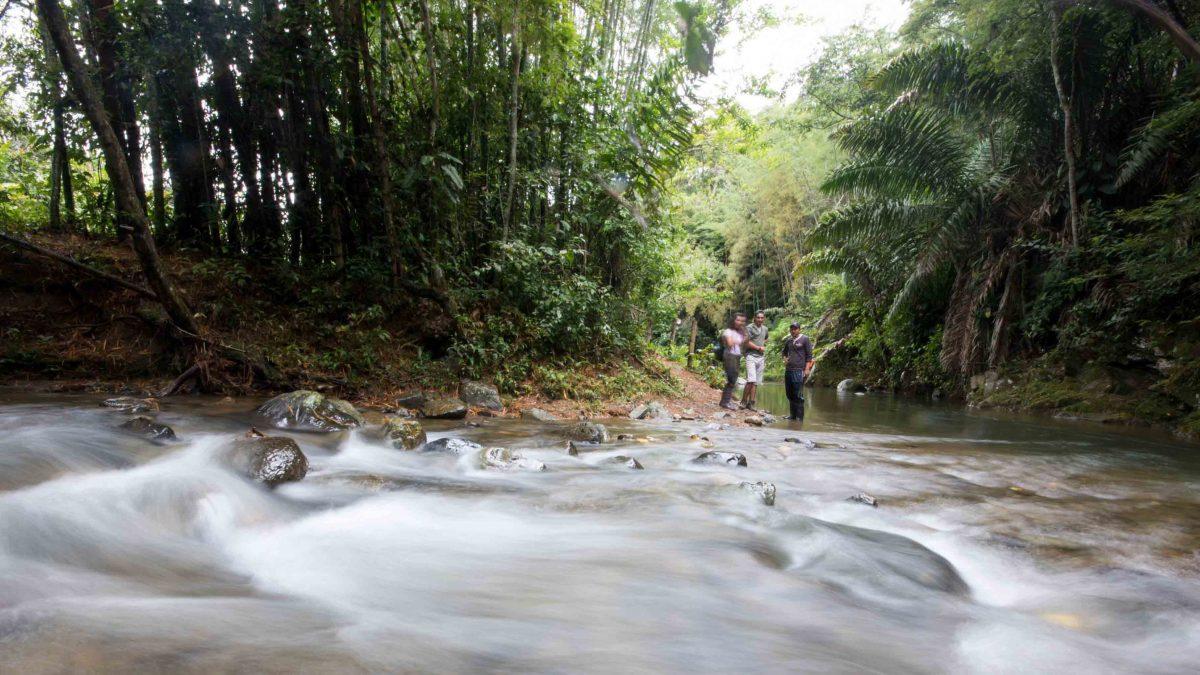 The Rio Chirapi, Pacto, Ecuador   ©Angela Drake