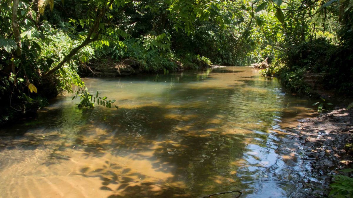 Amazon Jungle, Napo, Ecuador | ©Angela Drake