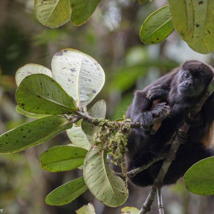 Nature Tour in Southern Ecuador