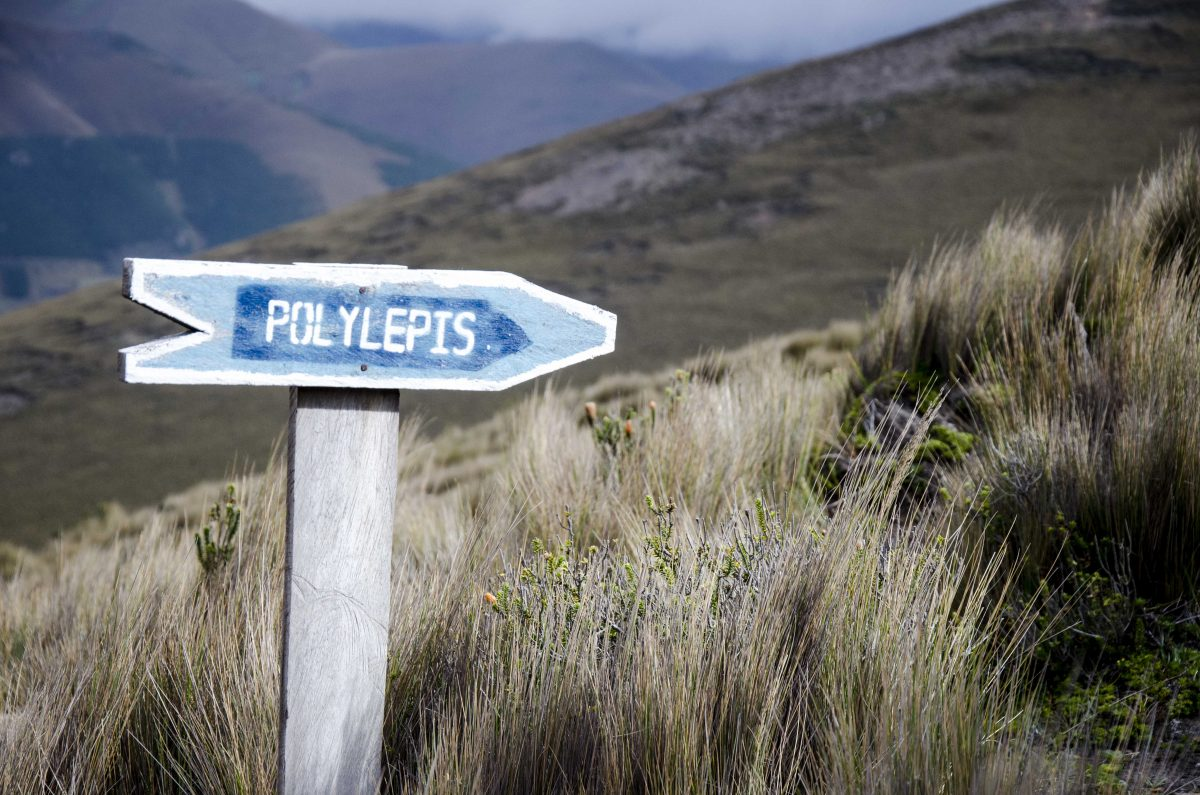 Polylepis Trail Sign, Chimborazo Wildlife Reserve, Ecuador | ©Angela Drake / Not Your Average American