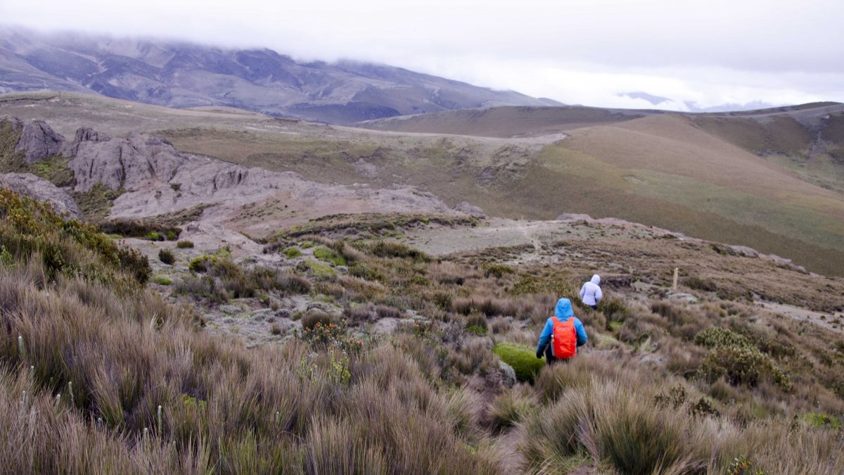 Polylepis Trail, Chimborazo Wildlife Reserve, Ecuador | ©Angela Drake / Not Your Average American