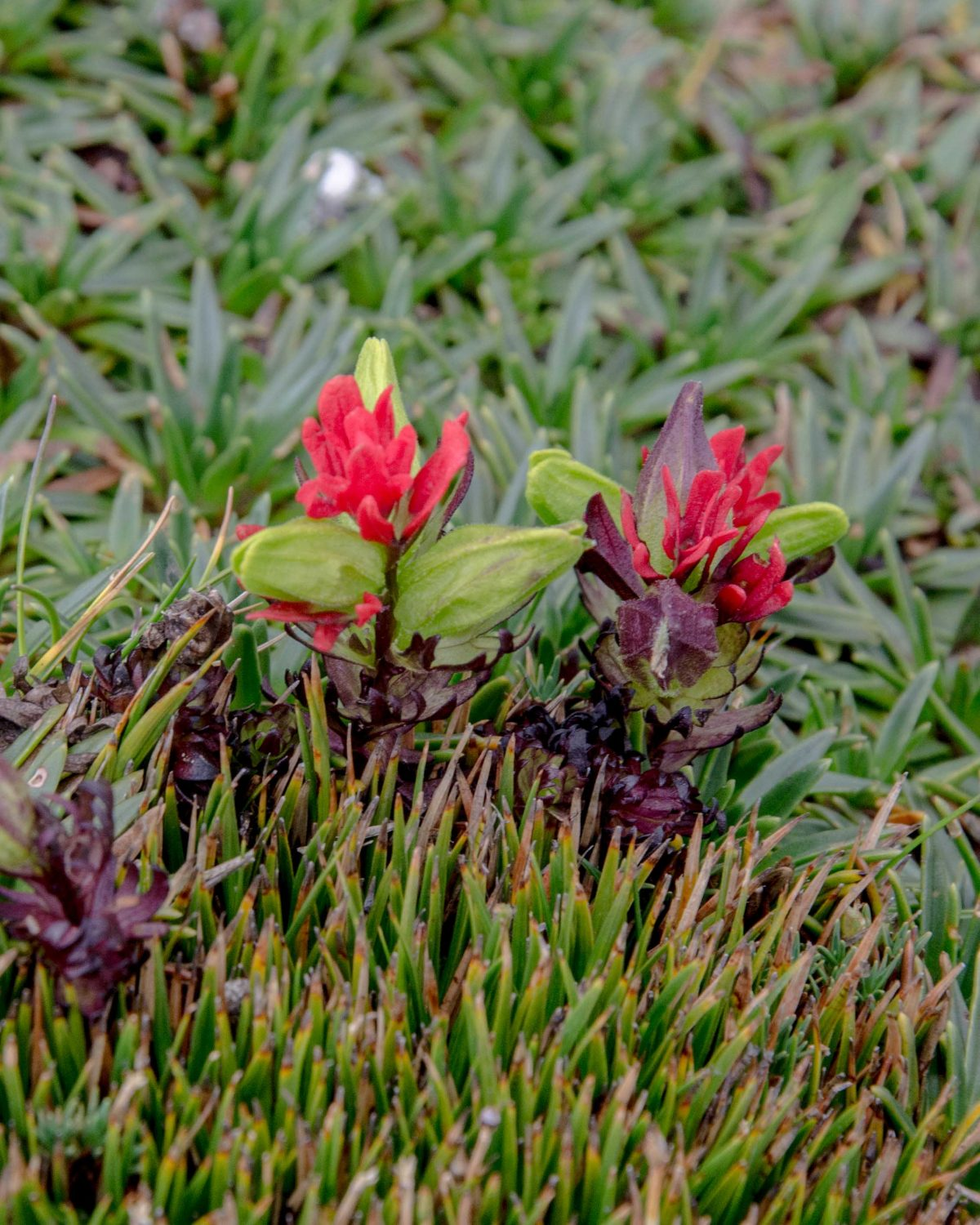 Wildflowers, Cajas National Park, Ecuador | © Angela Drake