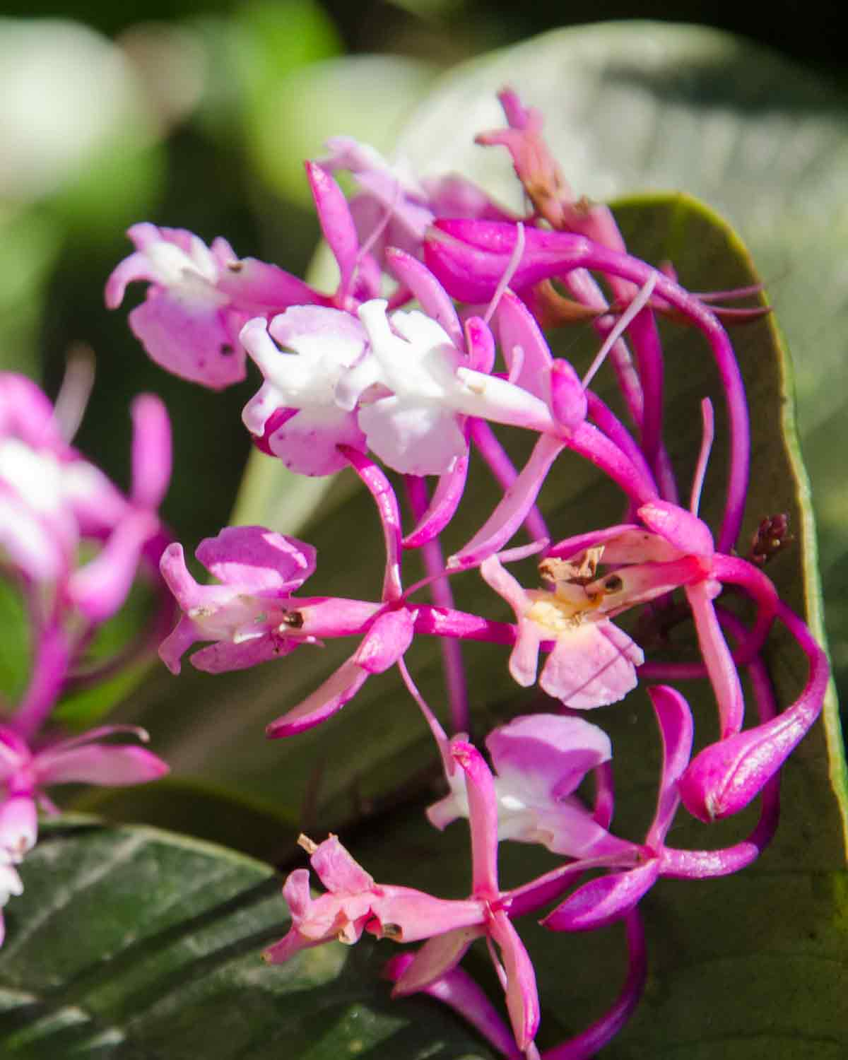 Orchids at the Botanical Garden in Loja, Ecuador | ©Angela Drake