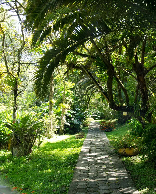 Un camino, Jardín Botánico de Loja, Ecuador | © Angela Drake