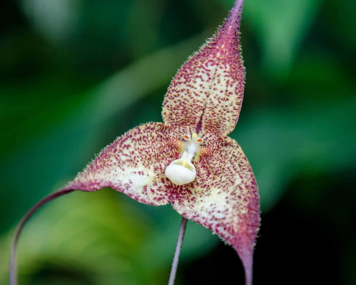 Orchids from San Jorge de Milpe, June 2015 | ©Angela Drake