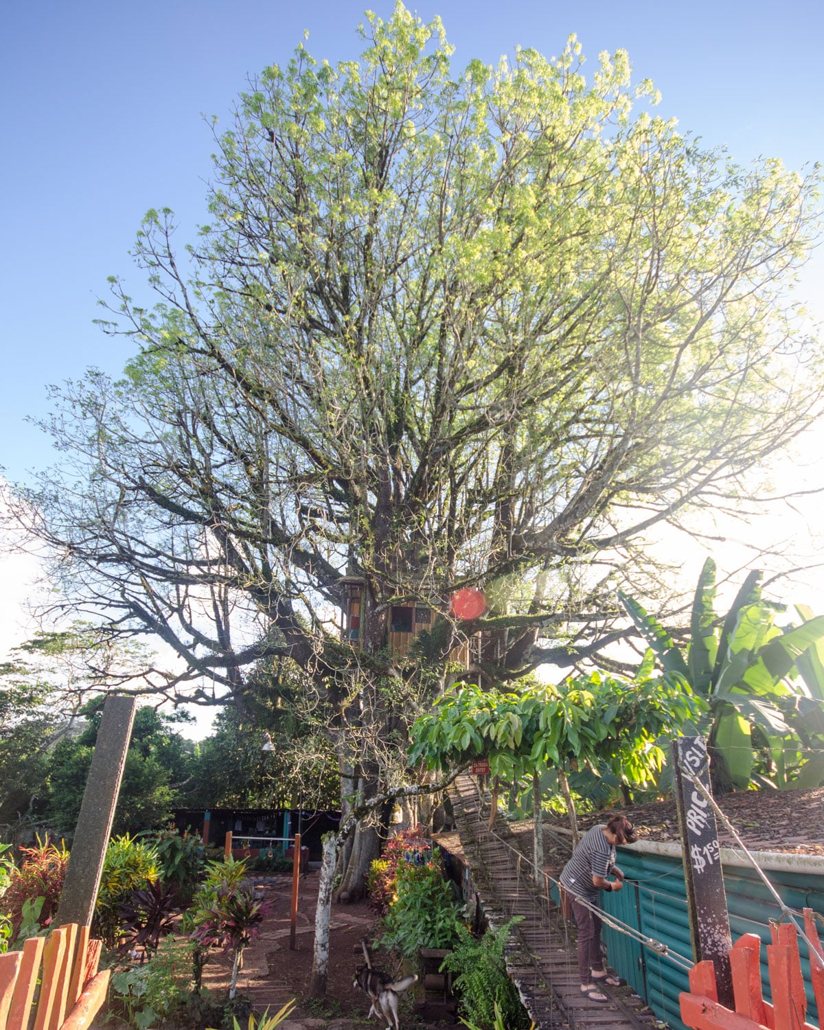 The oldest and widest ceibo in Ecuador, San Cristobal, The Galapagos | ©Angela Drake