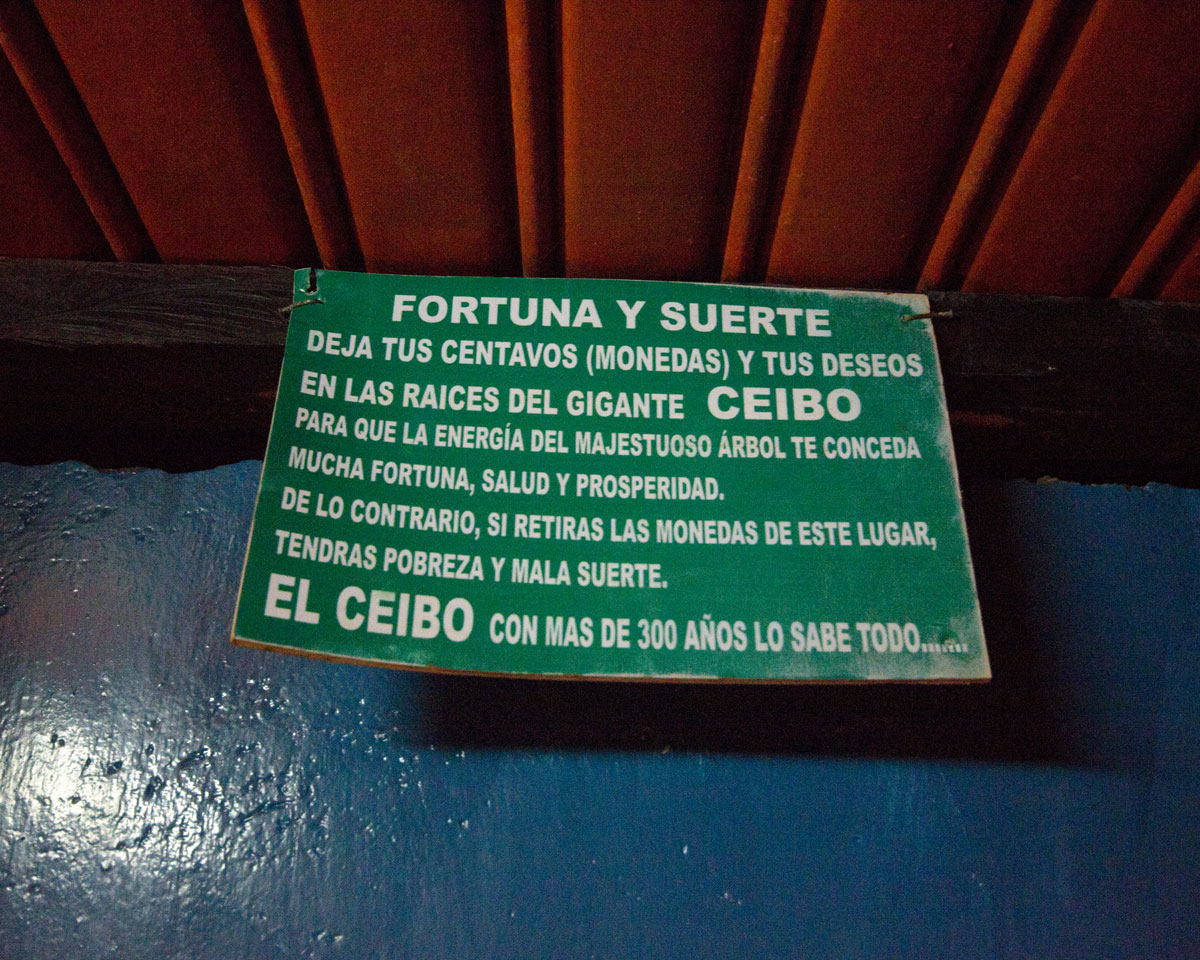 Fortune and Luck in the Oldest Ceibo Tree in Ecuador | ©Angela Drake