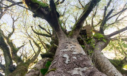 If the Oldest Ceibo Tree in Ecuador Could Tell Tales