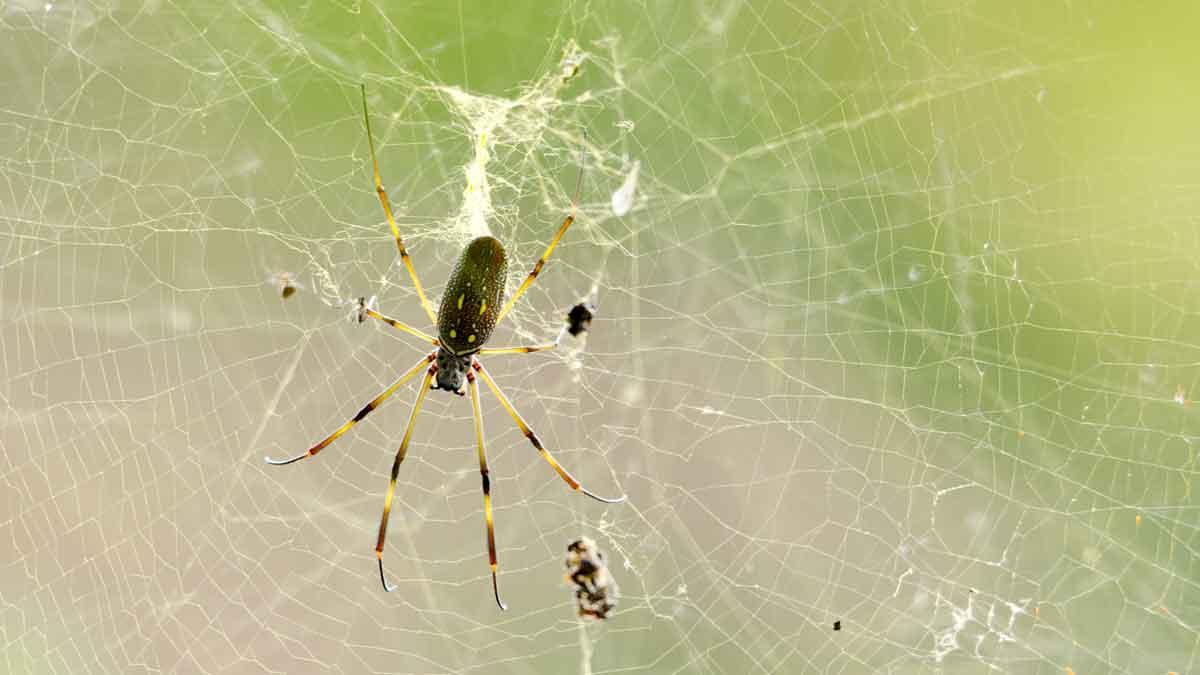 Spider on the Cascada El Palto Trail, Podocarpus National Park, Vilcambamba, Ecuador | ©Angela Drake