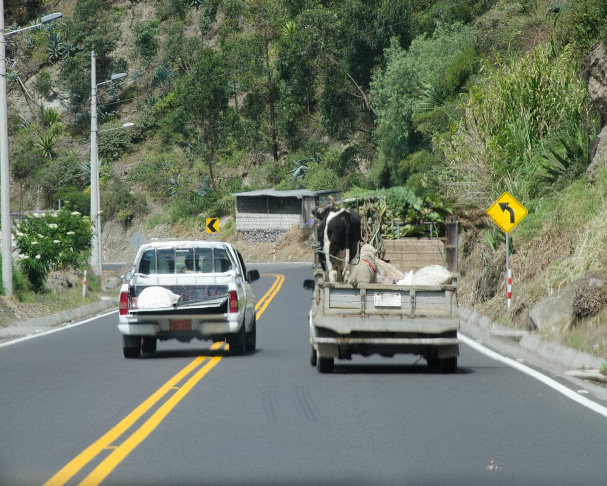 Driving in Ecuador includes watching many people try to pass before a curve | ©Angela Drake