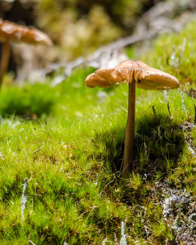 Un hongo silvestre creciendo en musgo; Reserva de la Biosfera Choco Andino, Ecuador | © Angela Drake