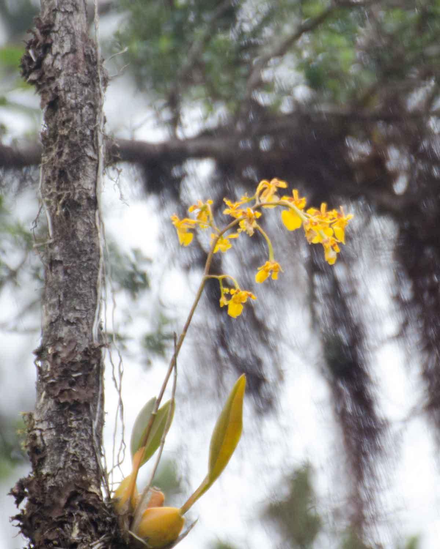 Orchid, Choco Andino Biosphere Reserve, Ecuador | ©Angela Drake
