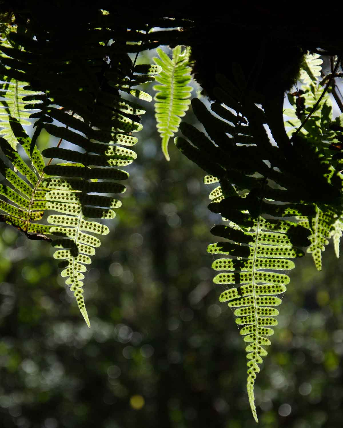 An example of ferns found throughout the Choco Andino Biosphere Reserve, Ecuador | ©Angela Drake