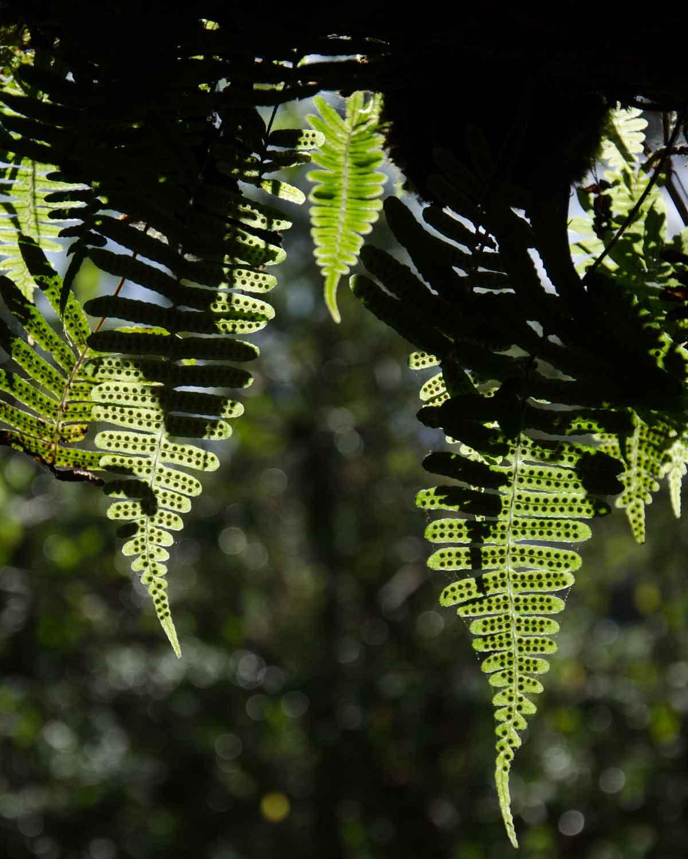 Un ejemplo de helechos encontrados en la Reserva de la Biosfera Chocó Andino, Ecuador | © Angela Drake