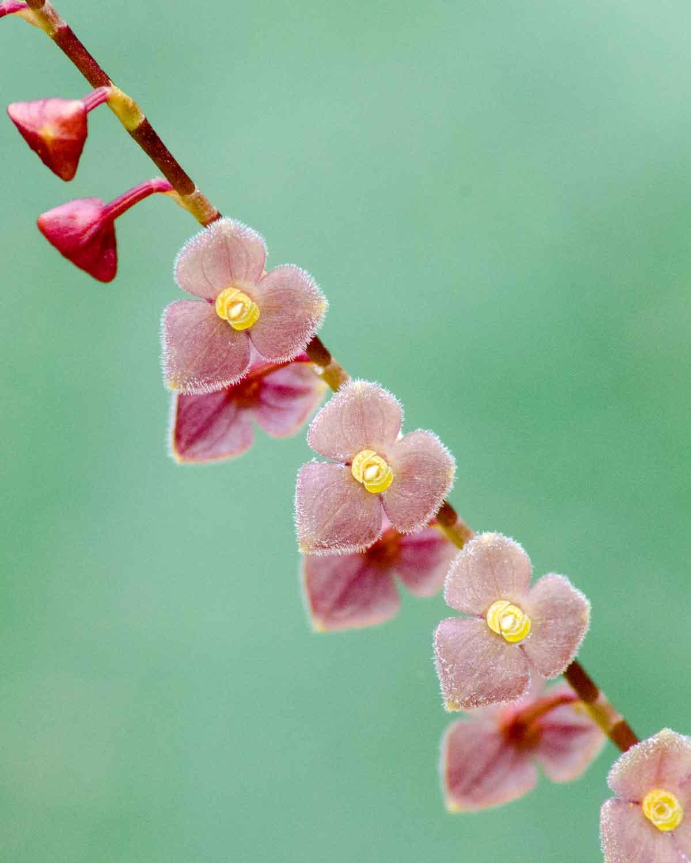 Orchids from San Jorge de Tandapaya, July 2016 | ©Angela Drake