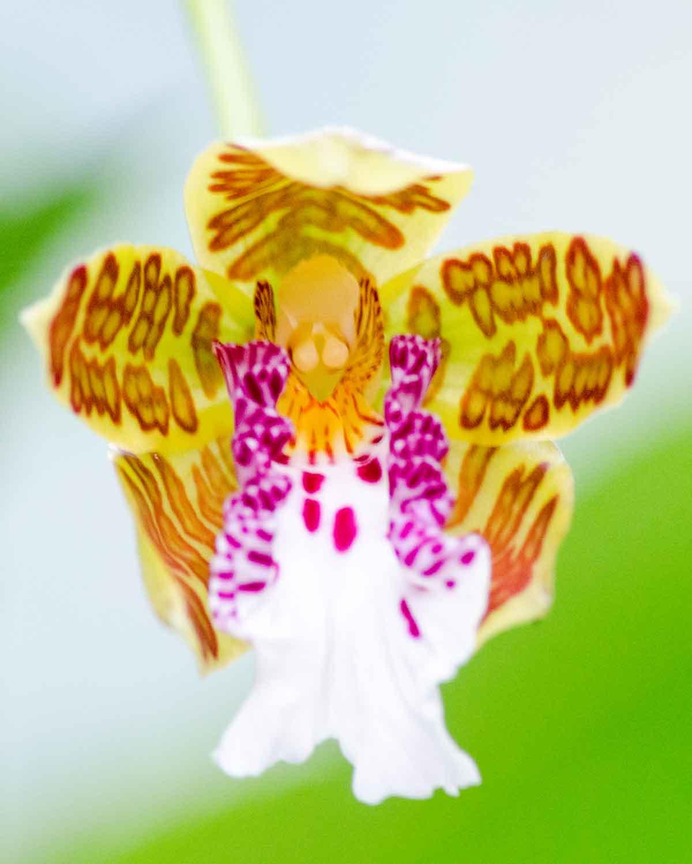 Orquídeas de la Reserva de la Biósfera Chocó Andino de Pichincha | © Angela Drake
