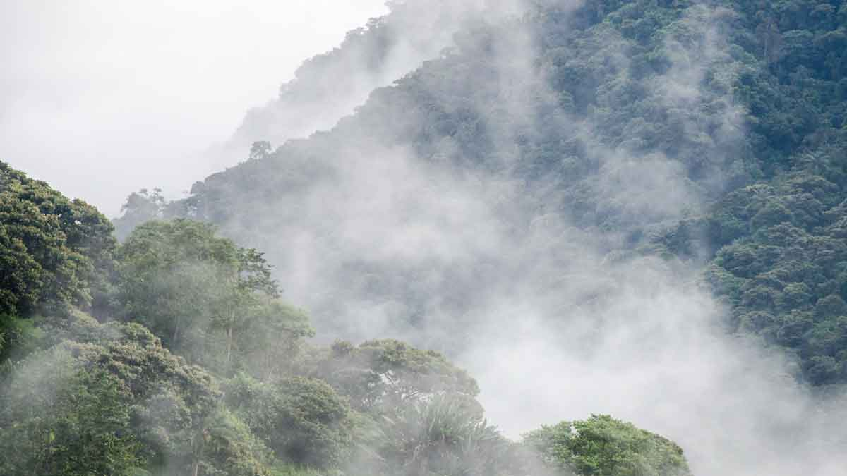 High altitude cloud forests of the Choco Andino Biosphere Reserve, Ecuador | ©Angela Drake