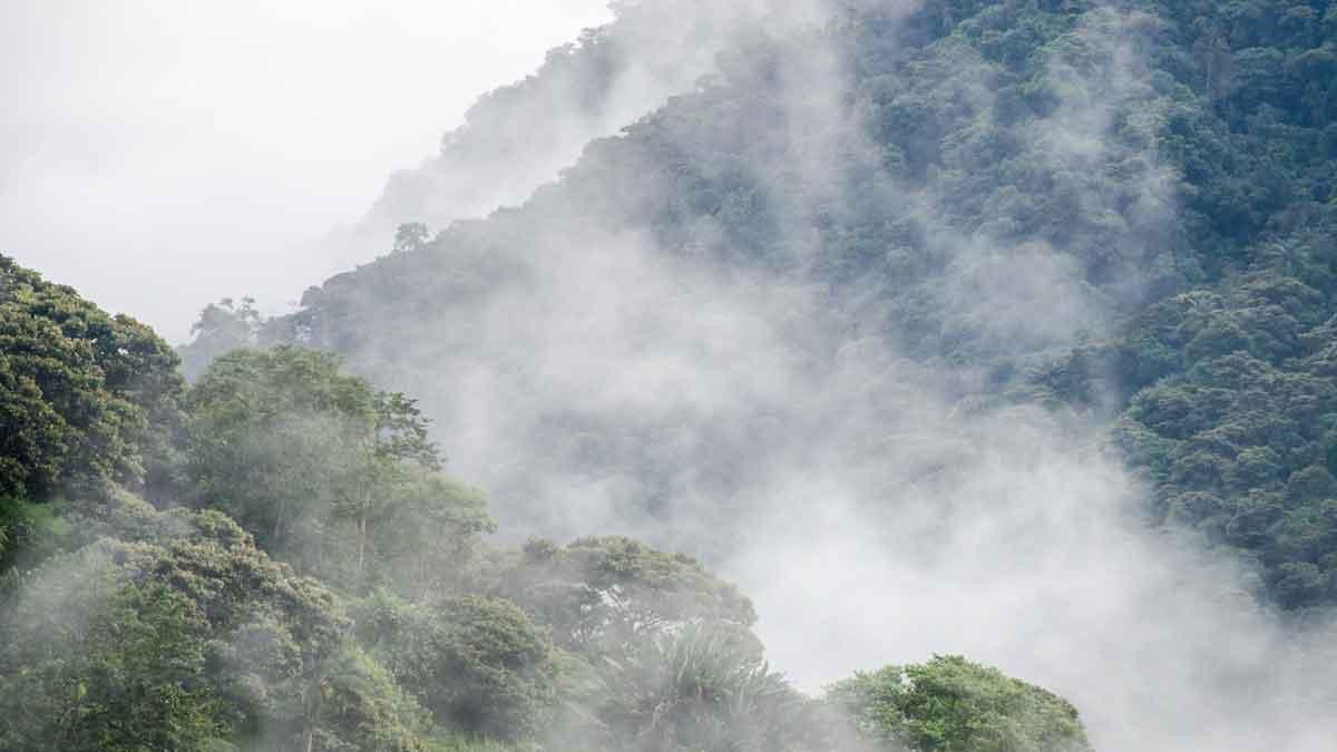 Bosques nublados de altura de la Reserva de la Biosfera Chocó Andino, Ecuador | © Angela Drake