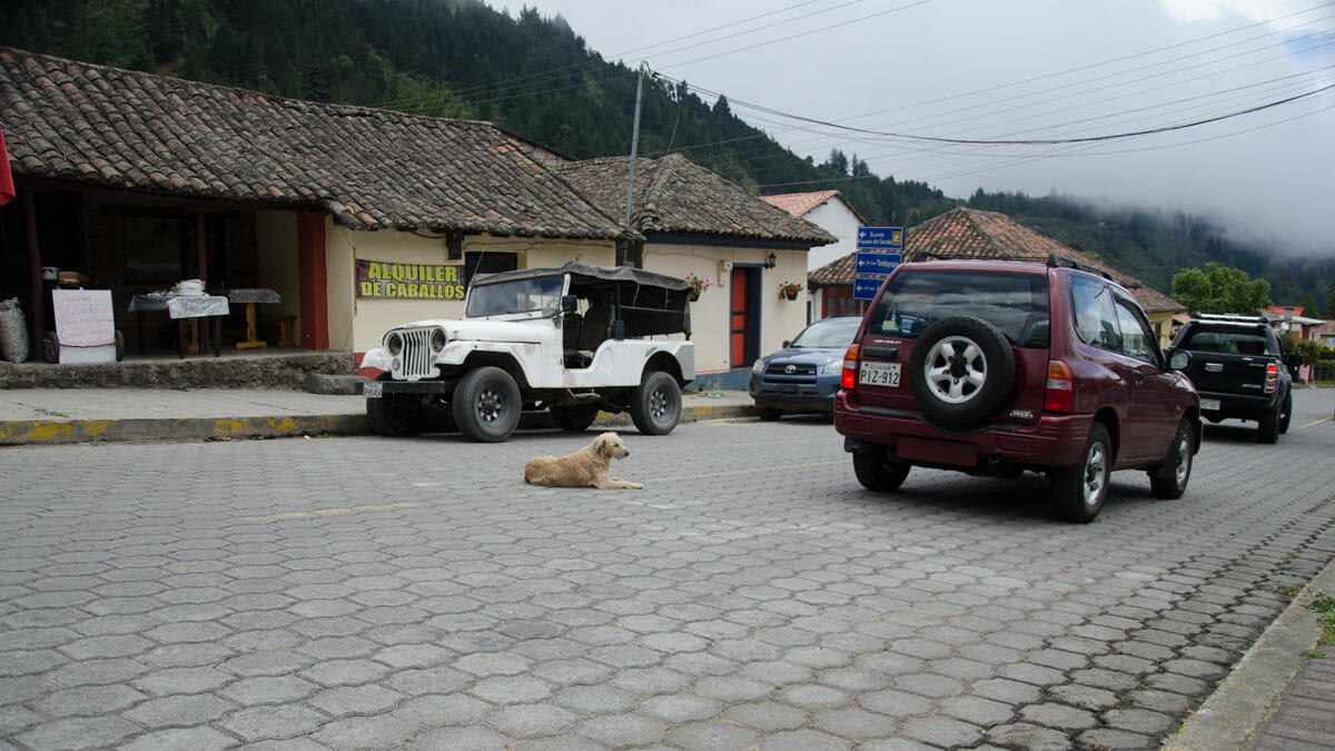 Dog in the main road connection Quito to Nono, Ecuador | ©Angela Drake