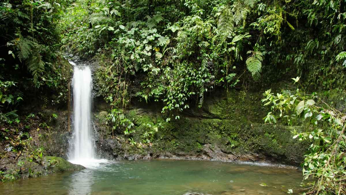 Una pequeña cascada y pozo de la Reserva de la Biosfera Chocó Andino, Ecuador | © Angela Drake
