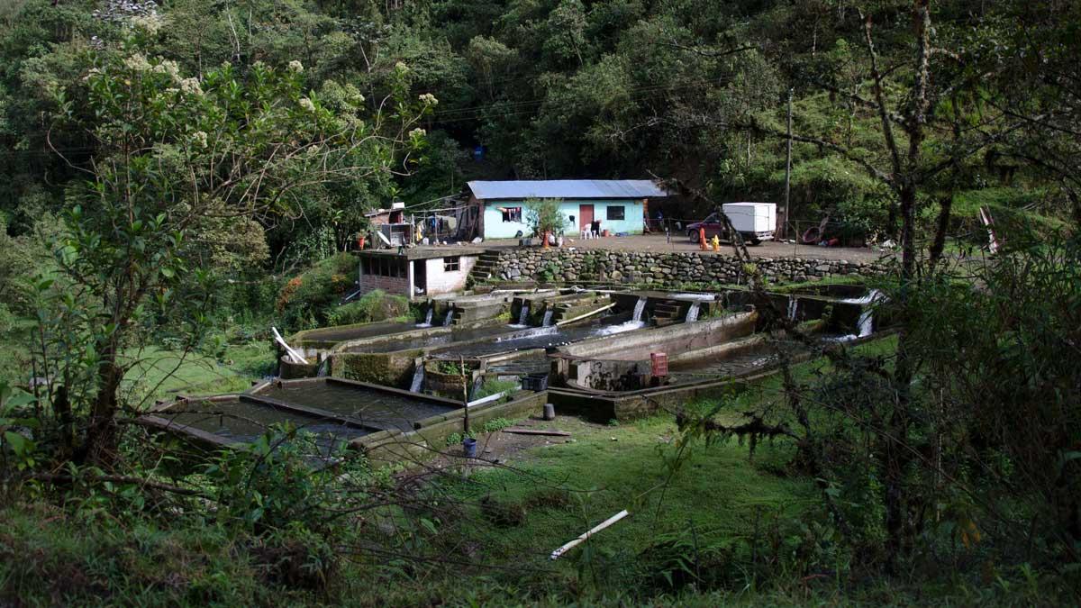 A trout farm along the Ruta del Colobrí, Ecuador | ©Angela Drake