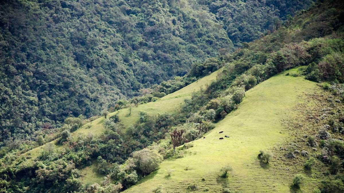 A view from La Gruta del Virgen de Alambí, Ecuador | ©Angela Drake