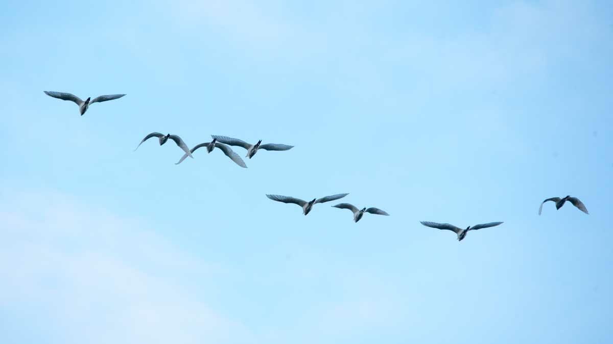 Egrets, San Agustín, Colombia | ©Angela Drake