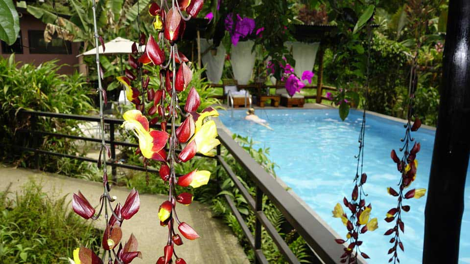 Birdwatching and Relaxation at a Mindo Ecolodge