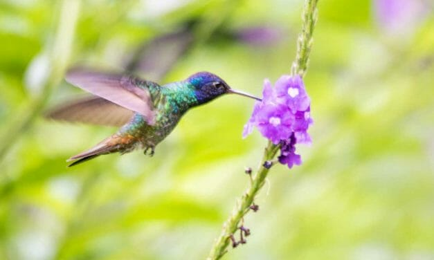 Copalinga Lodge and Reserve: A Jewel of Southern Ecuador